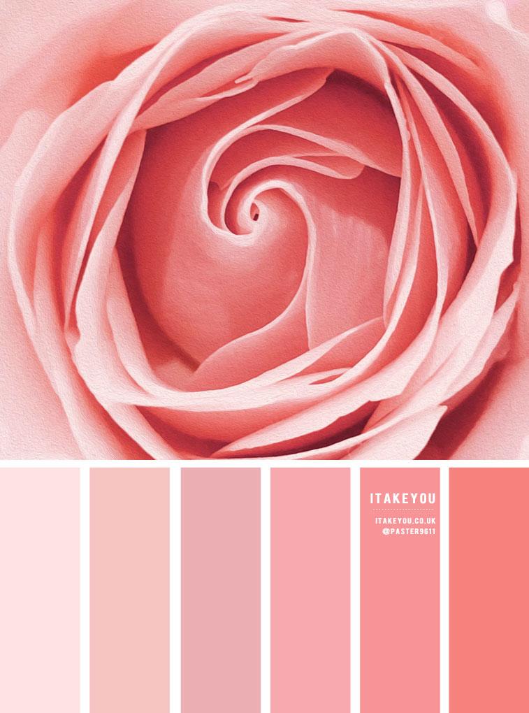 color inspiration, summer color , color , color wheel, color combos, mood board, color palette, color scheme, pink, paint color , pink color combos, pink color schemes #pink #pinktones