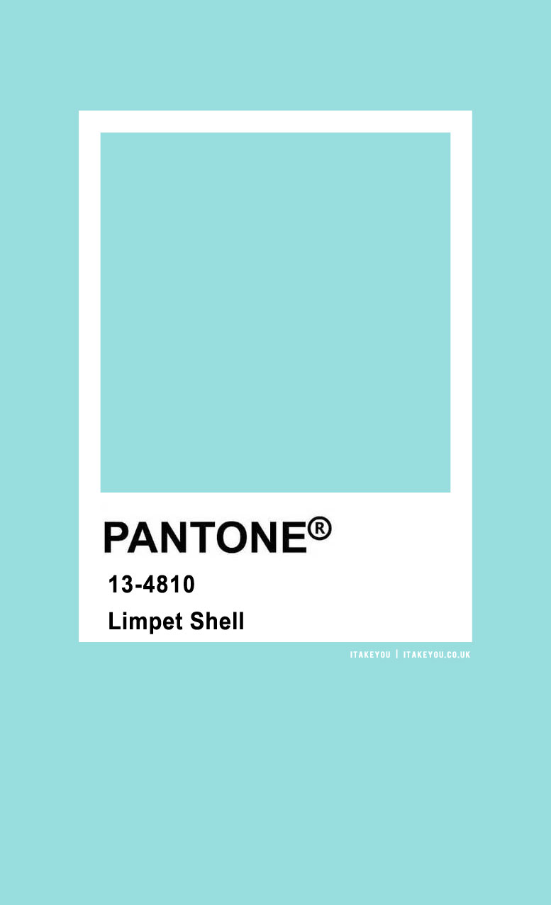 Pantone Color : Pantone Limpet Shell