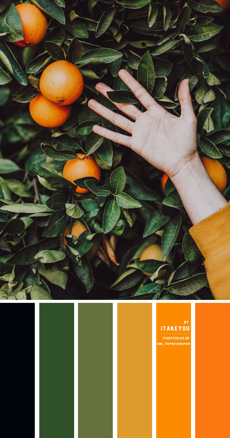 Black Green Orange and Mustard Yellow Color Scheme – Color Palette #33