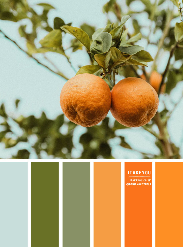 Powder Blue, Chive and Orange Hue Color Palette