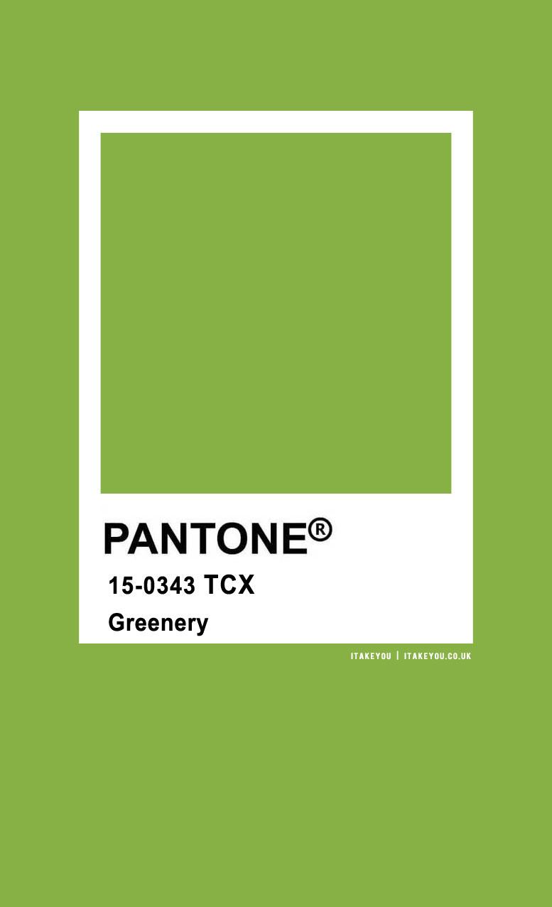 Pantone Color : Pantone