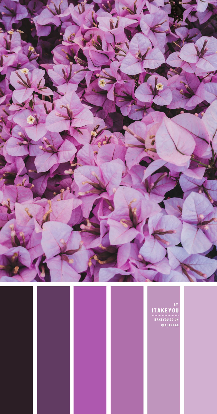 lilac and purple colour scheme, lilac color palette, lilac and lavender color combo, lavender color scheme, lilac and purple color scheme, color palette